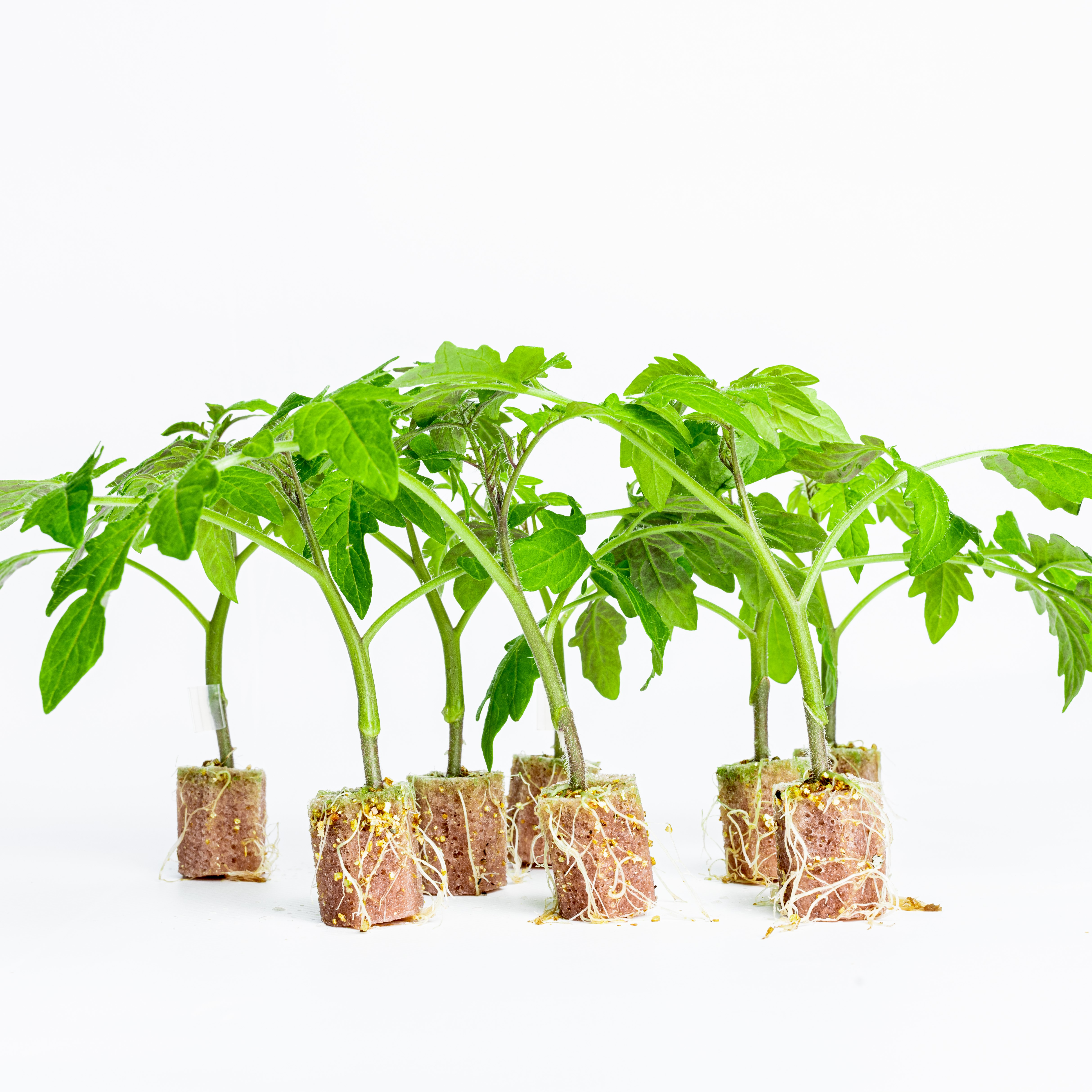 Groningen-based horticulture start-up receives 2 million for developing biodegradable foam substrate